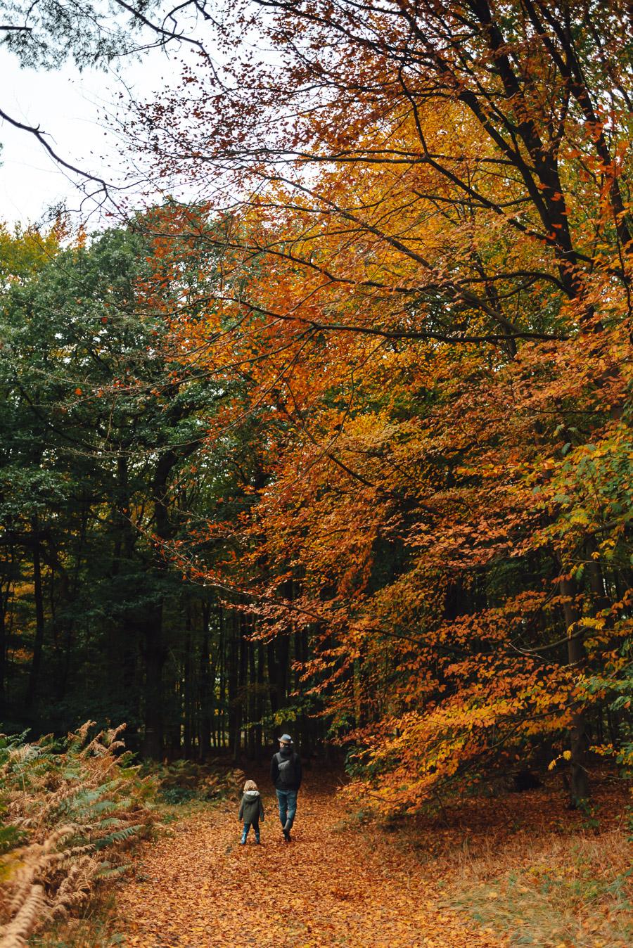 Wald_2020
